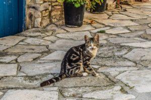 cat, animal, outdoors